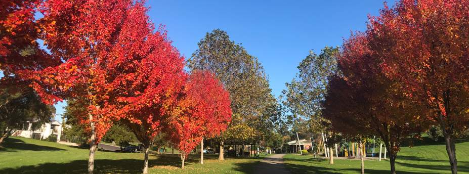 Supplying Advanced Trees to Local Councils