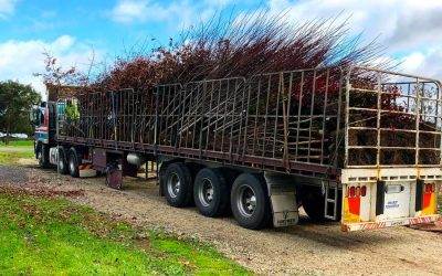 Transport and Delivery of Trees