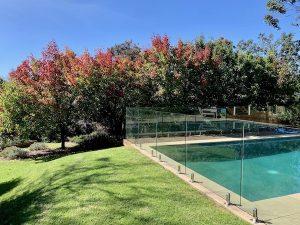 Garden Pear Trees